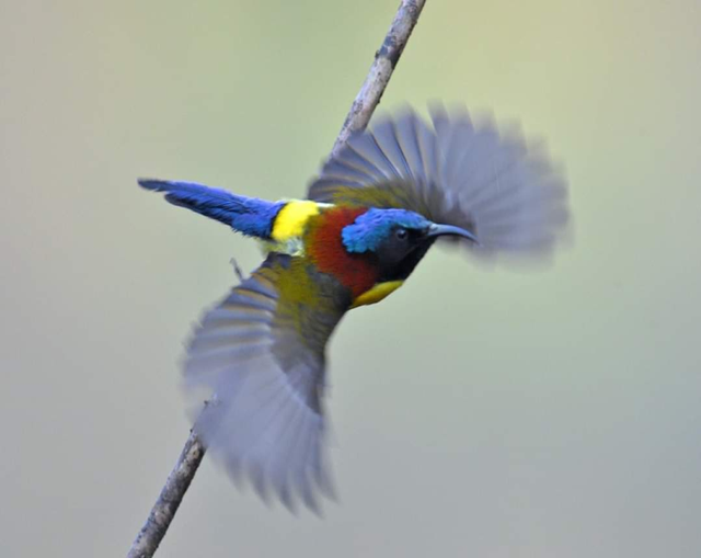 Leo núi chụp ảnh, ngắm chim rừng Sa Pa - 2