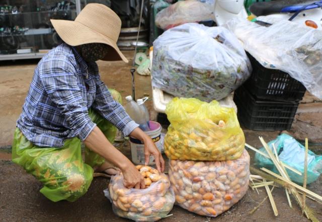 Đắk Nông: Kiếm nửa triệu đồng mỗi ngày nhờ mua thứ hạt ...bỏ đi - 2