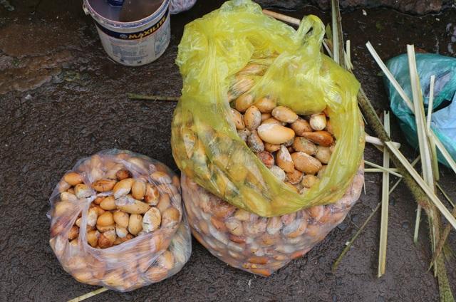 Đắk Nông: Kiếm nửa triệu đồng mỗi ngày nhờ mua thứ hạt ...bỏ đi - 3