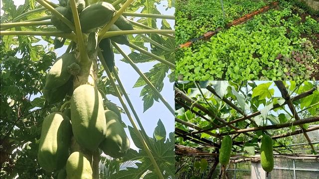 Bỏ phố về quê, mẹ đảm ở Bình Dương làm nhà vườn, trồng rau nuôi cá - 7