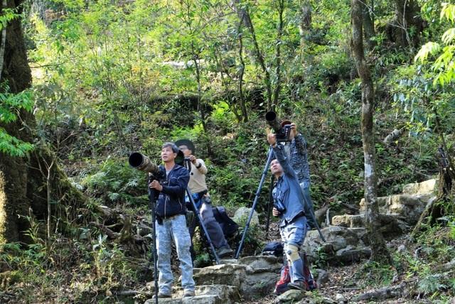 Leo núi chụp ảnh, ngắm chim rừng Sa Pa - 1