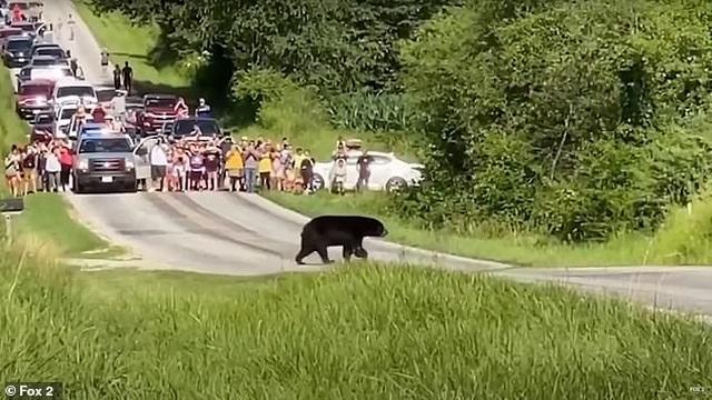 Chuyện chú gấu vượt 650km để tìm bạn đời gây sốt mạng xã hội - 2