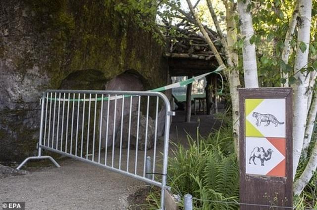 Hổ cắn xé nhân viên vườn thú ngay trước mặt du khách - 2