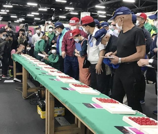 Cherry Nhật đắt kỷ lục, về Việt Nam giá 6,6 triệu đồng/kg - 1