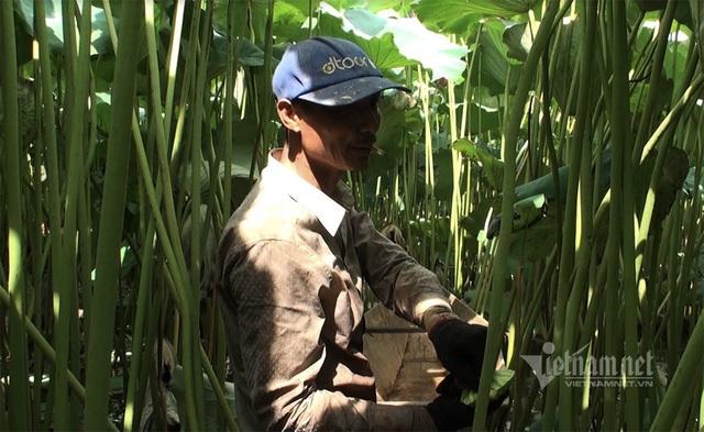 Nông dân kể chuyện: Hai tháng dầm mình dưới bùn, đút túi tiền tỷ - 7