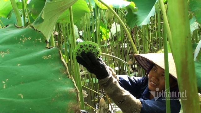 Nông dân kể chuyện: Hai tháng dầm mình dưới bùn, đút túi tiền tỷ - 8