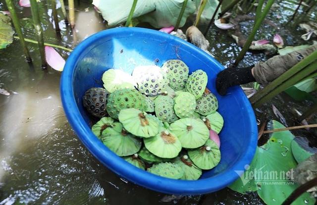 Nông dân kể chuyện: Hai tháng dầm mình dưới bùn, đút túi tiền tỷ - 9