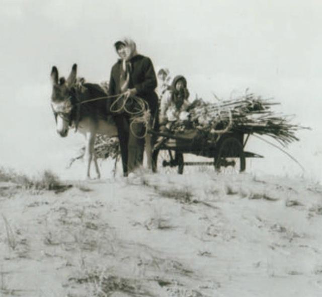 40 năm kiên trì, người phụ nữ biến hoang mạc thành thiên đường vạn cây xanh - 1
