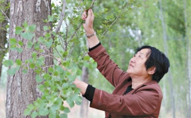 40 năm kiên trì, người phụ nữ biến hoang mạc thành thiên đường vạn cây xanh - 2