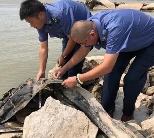 Thực hư chuyện quái vật dài 20m bí ẩn được phát hiện ở đập Tam Hiệp - 2