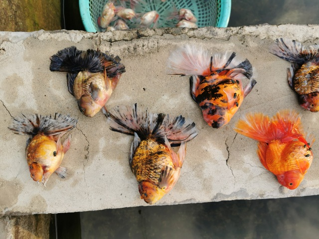 Bể cá cảnh đẹp như mơ giá nửa tỷ đồng chết sạch chỉ vì sự cố - 1