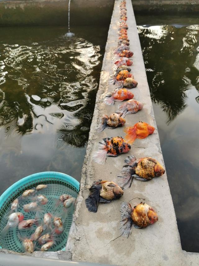Bể cá cảnh đẹp như mơ giá nửa tỷ đồng chết sạch chỉ vì sự cố - 3