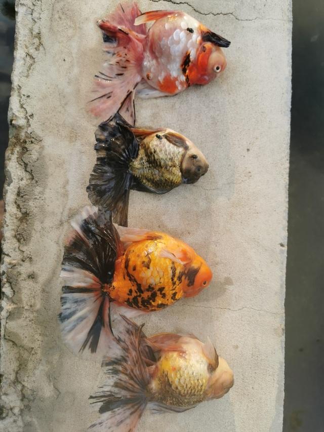 Bể cá cảnh đẹp như mơ giá nửa tỷ đồng chết sạch chỉ vì sự cố - 4