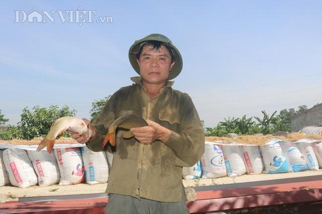 Nuôi cá chép lai thâm canh, nông dân Thanh Hóa lời 150 triệu đồng/ha - 1