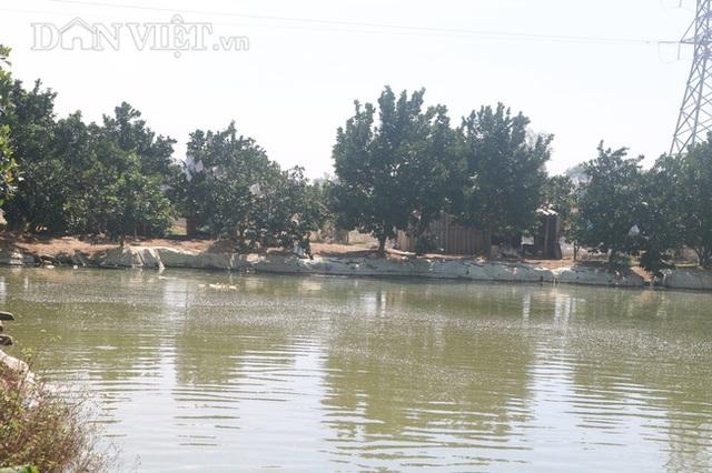 Nuôi cá chép lai thâm canh, nông dân Thanh Hóa lời 150 triệu đồng/ha - 2