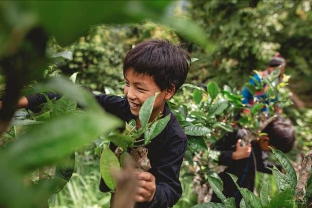Cuộc sống của trẻ em dân tộc Cờ Lao qua ống kính nhiếp ảnh - 1