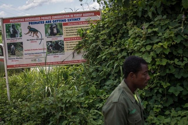 Tranh cãi dự án khai thác bô-xít của Trung Quốc trong rừng Ghana