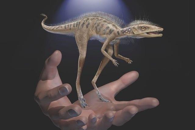 Một loài săn mồi nhỏ bé có thể là tổ tiên của khủng long khổng lồ? - 1