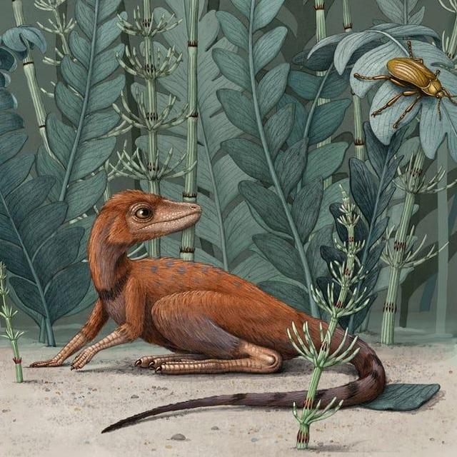Một loài săn mồi nhỏ bé có thể là tổ tiên của khủng long khổng lồ? - 2