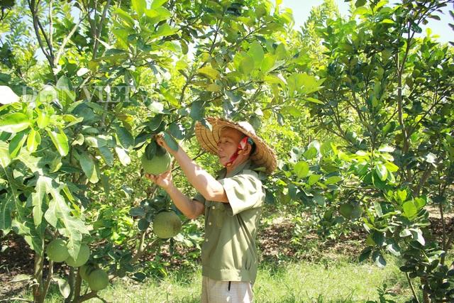 """""""Lão gàn"""" biến đất sỏi đá thành vườn cây ăn quả, thu hàng trăm triệu mỗi năm - 1"""