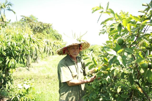 """""""Lão gàn"""" biến đất sỏi đá thành vườn cây ăn quả, thu hàng trăm triệu mỗi năm - 4"""
