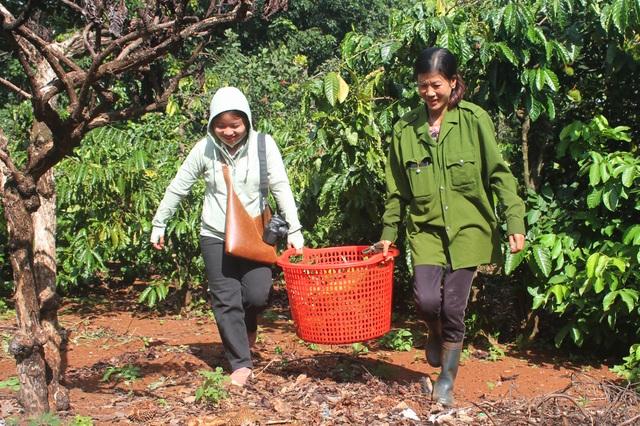 Gia Lai: Về miệt vườn xem cây ra quả thu trăm triệu đồng mỗi năm - 10