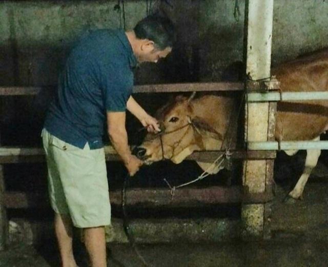 Bắt quả tang một cơ sở bơm nước vào bò để tăng trọng lượng thịt - 1