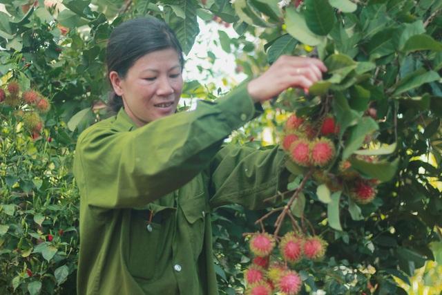 Gia Lai: Về miệt vườn xem cây ra quả thu trăm triệu đồng mỗi năm - 3