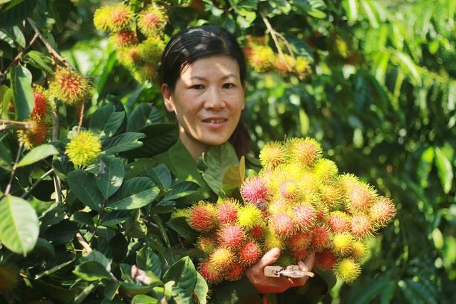 Gia Lai: Về miệt vườn xem cây ra quả thu trăm triệu đồng mỗi năm - 4