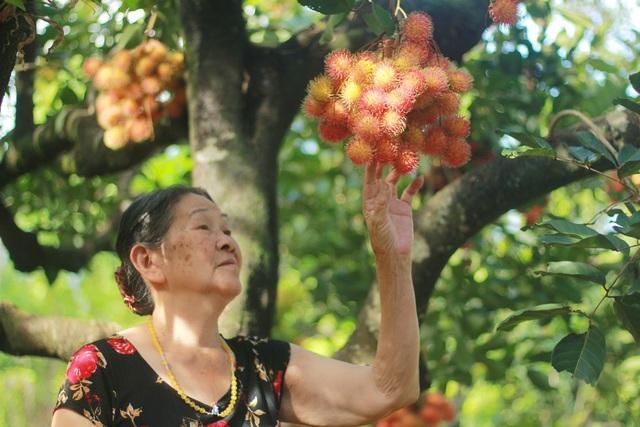Gia Lai: Về miệt vườn xem cây ra quả thu trăm triệu đồng mỗi năm - 5