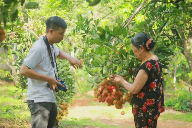 Gia Lai: Về miệt vườn xem cây ra quả thu trăm triệu đồng mỗi năm - 6