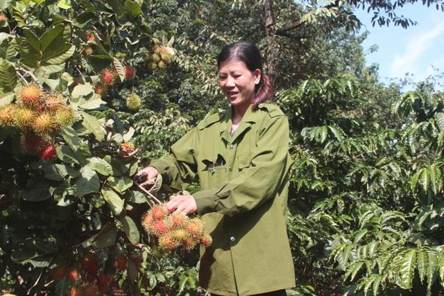 Gia Lai: Về miệt vườn xem cây ra quả thu trăm triệu đồng mỗi năm - 7