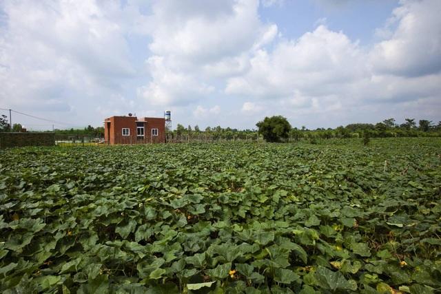 """Nhà vườn rộng 90m2 ở Đồng Nai gây """"sốt"""" vì xây dựng chỉ 500 triệu đồng - 3"""