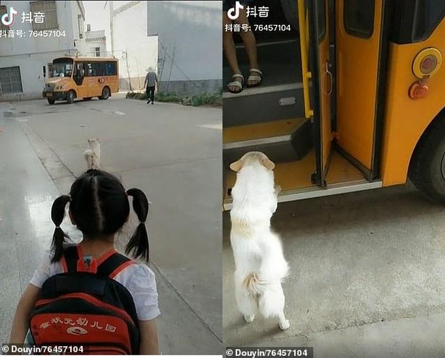 Trung Quốc: Chú chó thông minh đưa đón cô chủ đi học hàng ngày - 1