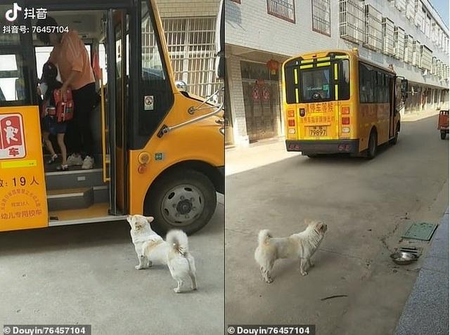 Trung Quốc: Chú chó thông minh đưa đón cô chủ đi học hàng ngày - 2
