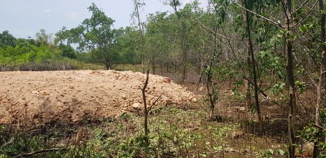 Chặn đứng việc tự ý chặt rừng ngăn mặn để san mặt bằng tại Quảng Trị - 7
