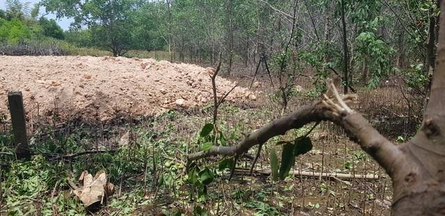 Chặn đứng việc tự ý chặt rừng ngăn mặn để san mặt bằng tại Quảng Trị - 2