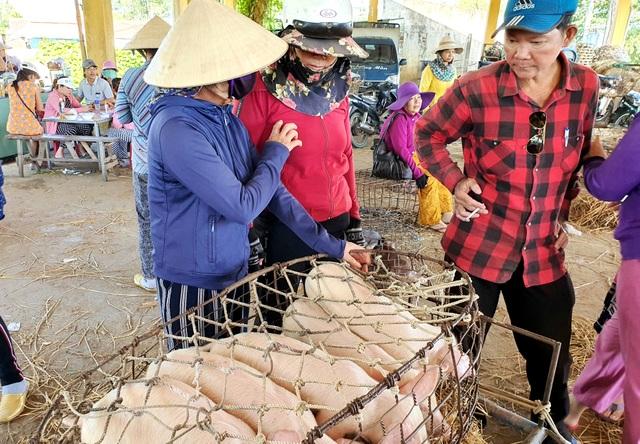 """Ở Quảng Nam có nghề đặc biệt: Phụ nữ """"bồng heo"""" - 3"""