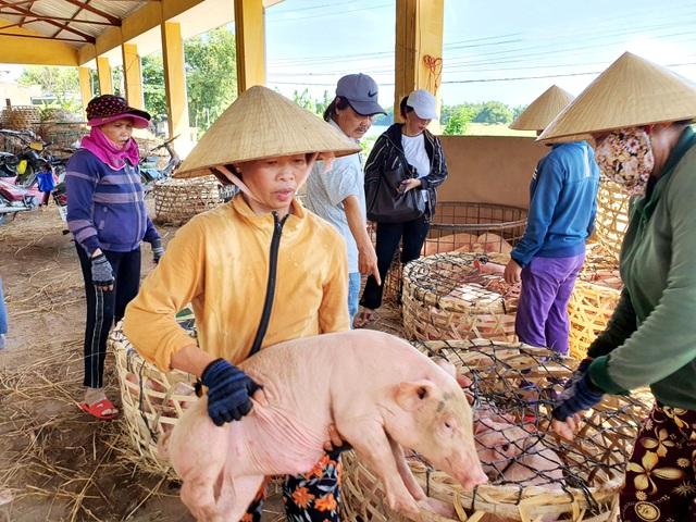 """Ở Quảng Nam có nghề đặc biệt: Phụ nữ """"bồng heo"""" - 4"""