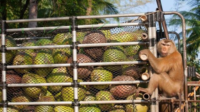 Bí mật khủng khiếp về dầu dừa - 1