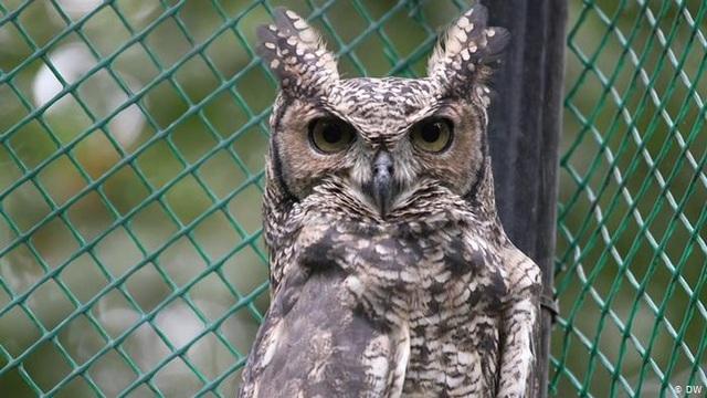 Nghe không chỉ bằng tai: Những loài vật có thính giác siêu việt - 9