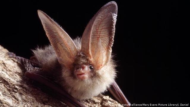 Nghe không chỉ bằng tai: Những loài vật có thính giác siêu việt - 3