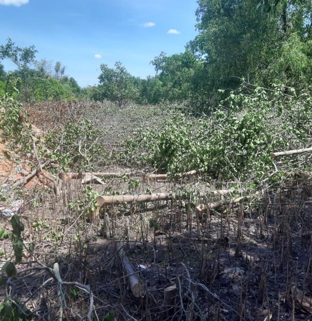 Chặn đứng việc tự ý chặt rừng ngăn mặn để san mặt bằng tại Quảng Trị - 3