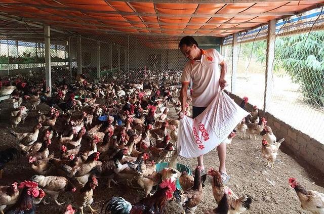 Đang nghèo nhất làng trở thành tỷ phú nhờ khởi nghiệp từ 20 con gà mái - 1