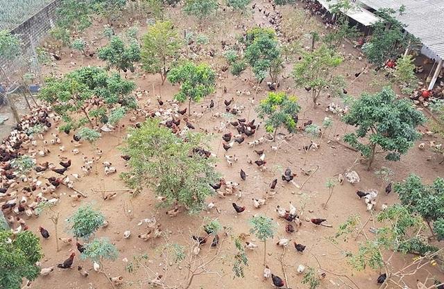 Đang nghèo nhất làng trở thành tỷ phú nhờ khởi nghiệp từ 20 con gà mái - 2
