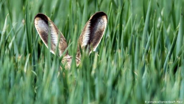 Nghe không chỉ bằng tai: Những loài vật có thính giác siêu việt - 1