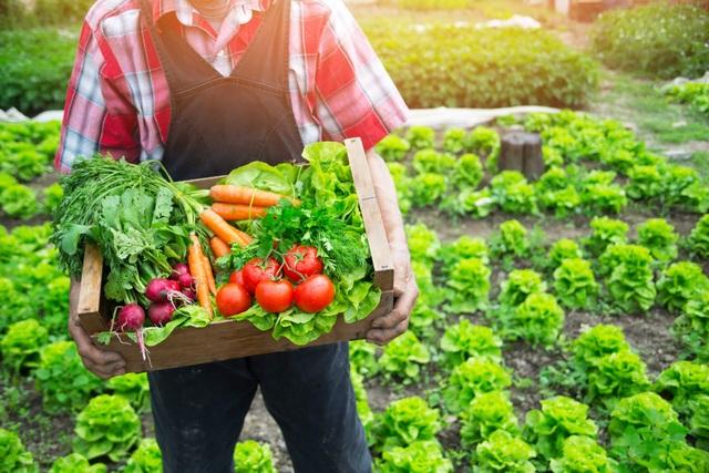 Học cách ăn uống thuận theo tự nhiên để sống khỏe, đẩy lùi bệnh tật - 1