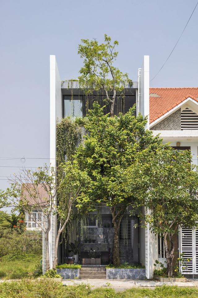 """Vợ chồng trẻ ở Huế làm """"vườn đặt trong nhà"""" khiến mùa hè vẫn mát rượi - 1"""
