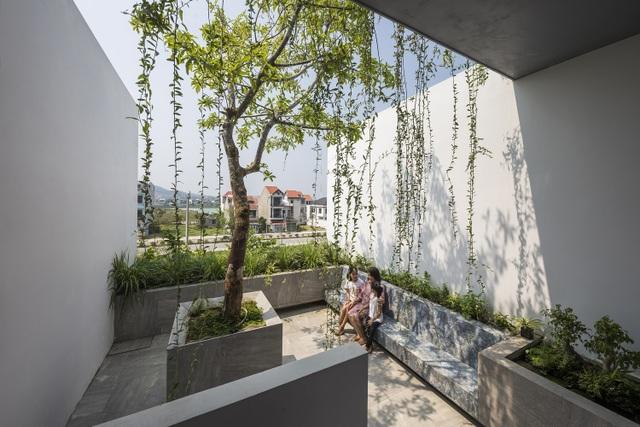 """Vợ chồng trẻ ở Huế làm """"vườn đặt trong nhà"""" khiến mùa hè vẫn mát rượi - 17"""