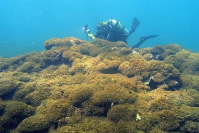Phát hiện loài tảo bí ẩn tại rạn san hô ở Hawaii - 1